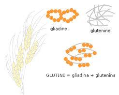 glutine